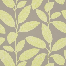 Papier peint - Thibaut - Komodo Leaves - Grey and Green