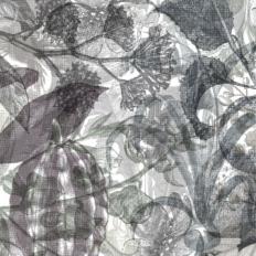 Décor mural - Rebel Walls - Jelly Belly Plants - Noir & Blanc