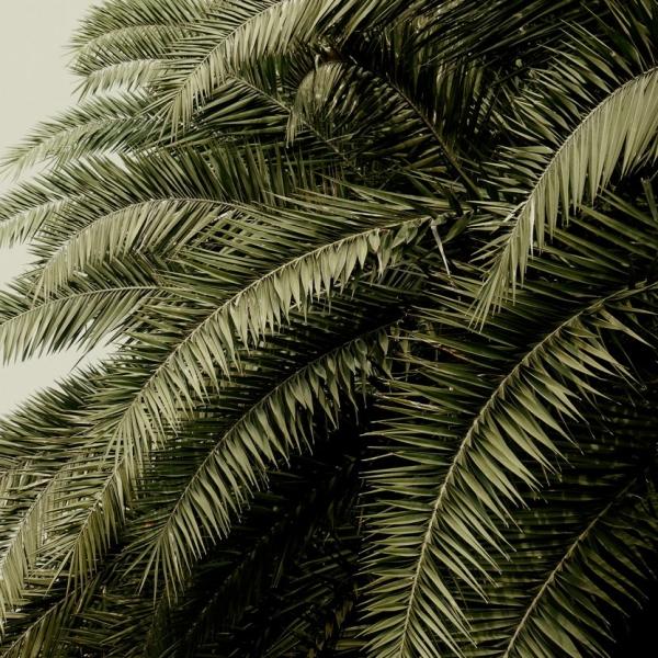 papier peint leaf love mirrored miroir de feuilles. Black Bedroom Furniture Sets. Home Design Ideas