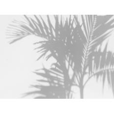 Décor mural - Au fil des Couleurs - Palm Shadow