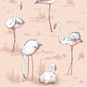 Papier peint - Cole and Son - Flamingos - rose ballerine