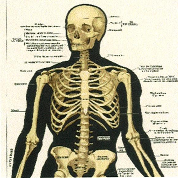 Chambre Garcon Chic : Papier peint beige panneau décoratif illustré de squelette