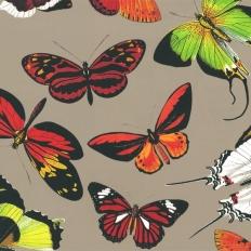 Décor mural - Deyrolle - Papillons