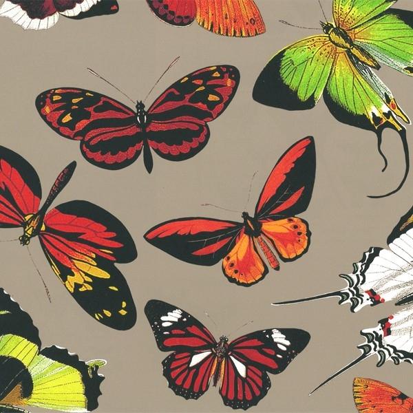 papier peint papillons de deyrolle panneau d coratif intiss. Black Bedroom Furniture Sets. Home Design Ideas