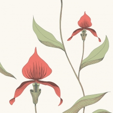 Papier peint - Cole and Son - Orchid - Red & White
