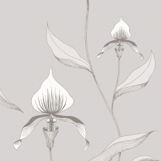 Papier peint - Cole and Son - Orchid - Grey & White